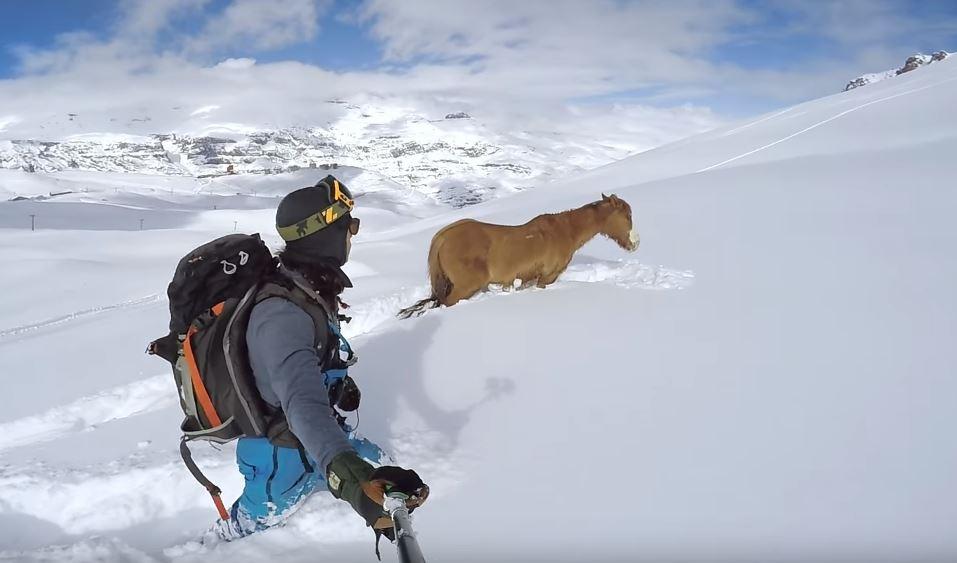 パウダーで動けない馬を助けたスノーボーダーの感動映像